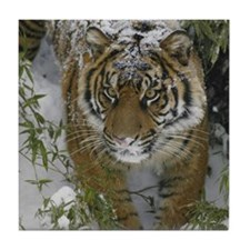 Tiger In The Snow Tile Coaster