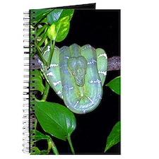 Emerald Tree Boa - Morticia Journal