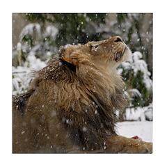 Lion in Snow Tile Coaster