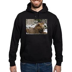 Lion in Snow Hoodie