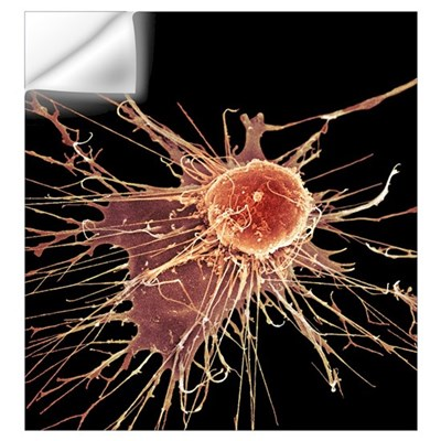 Stem cell, SEM Wall Decal