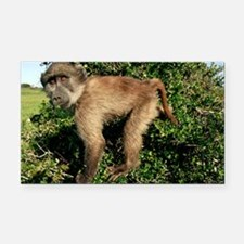 Juvenile chacma baboon - Car Magnet