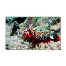 Mantis shrimp - Car Magnet