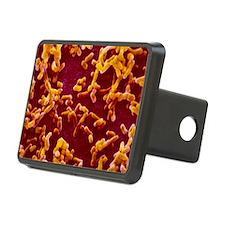 Yersinia pestis (plague) bacteria - Hitch Cover