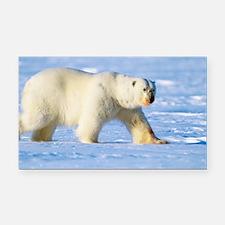 Polar bear - Car Magnet