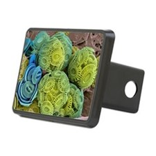 Calcareous phytoplankton, SEM - Hitch Cover