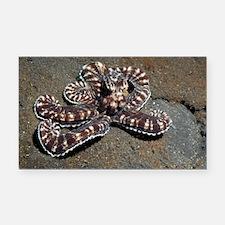 Wonderpus octopus - Car Magnet