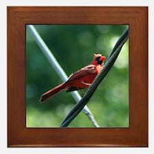 Perching Cardinal Framed Tile
