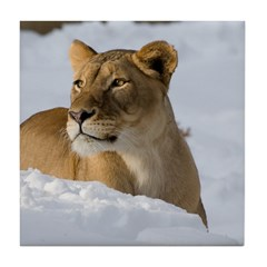 Female Lion in Snow Tile Coaster