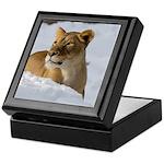 Female Lion in Snow Keepsake Box