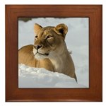 Female Lion in Snow Framed Tile