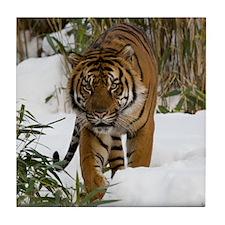 Tiger Walking in Snow Tile Coaster