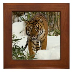 Tiger Walking in Snow Framed Tile