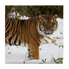 Tiger Standing in Snow Tile Coaster