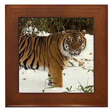 Tiger Standing in Snow Framed Tile