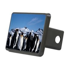 King penguins - Hitch Cover