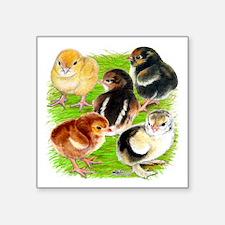"""Five Chicks Square Sticker 3"""" x 3"""""""
