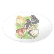 Five Chicks Decal