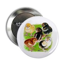"Five Chicks 2.25"" Button"