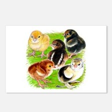 Five Chicks Postcards (Package of 8)