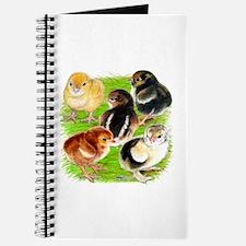 Five Chicks Journal