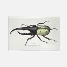 Scarab Hercules Beetle Rectangle Magnet