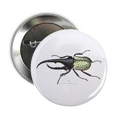 Scarab Hercules Beetle Button