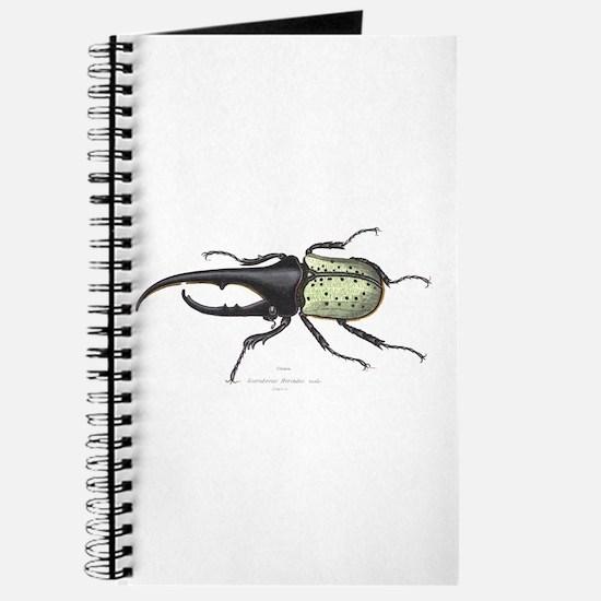 Scarab Hercules Beetle Journal