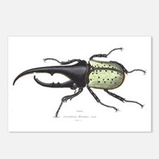 Scarab Hercules Beetle Postcards (Package of 8)