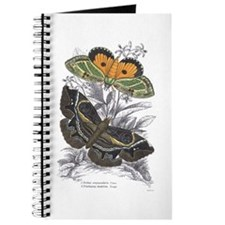 Colorful Moth Insects Journal