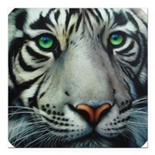 "tigerwhite.png Square Car Magnet 3"" x 3"""