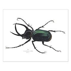 Scarab Atlas Beetle Posters