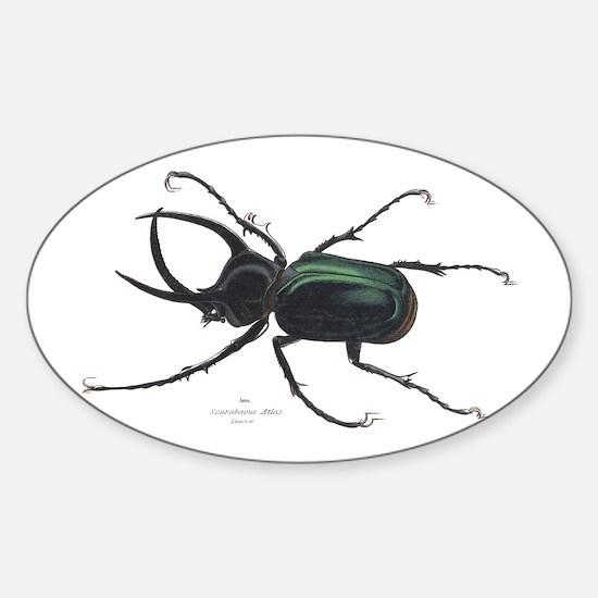 Scarab Atlas Beetle Oval Decal