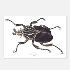 Goliath Beetle Postcards (Package of 8)