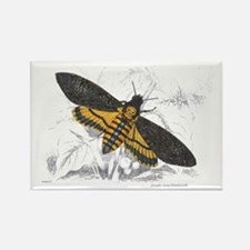 Deaths-head Hawkmoth Moth Rectangle Magnet