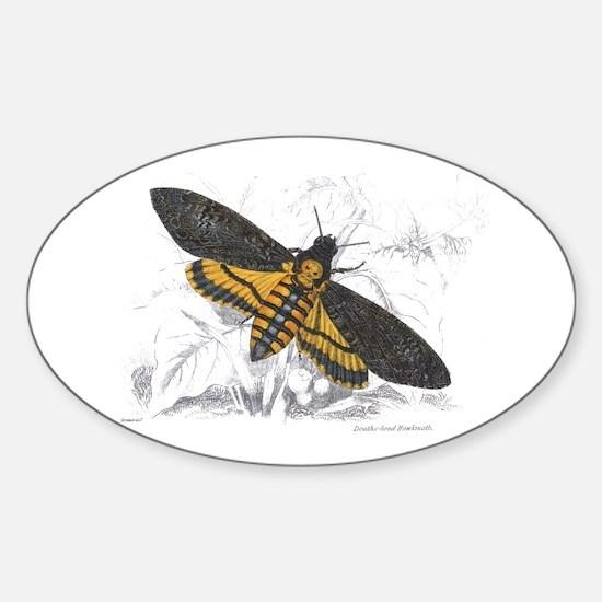 Deaths-head Hawkmoth Moth Oval Decal