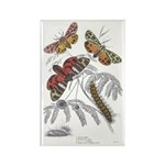 Moth Insects Rectangle Magnet (10 pack)