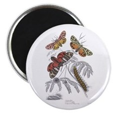 "Moth Insects 2.25"" Magnet (10 pack)"