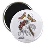 Moth Insects Magnet