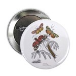 Moth Insects Button