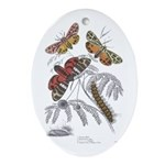 Moth Insects Oval Ornament