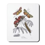 Moth Insects Mousepad