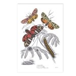 Moth Insects Postcards (Package of 8)
