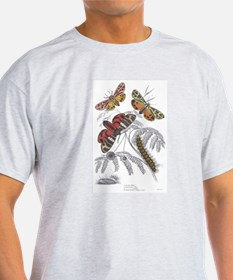 Moth Insects (Front) Ash Grey T-Shirt