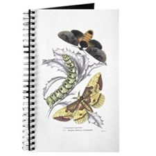Moth Insects Journal