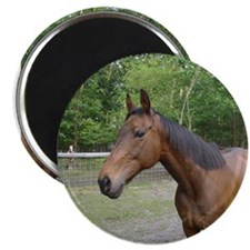 Thoroughbred Magnet
