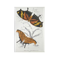 Butterfly Insects Rectangle Magnet