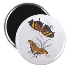 Butterfly Insects Magnet