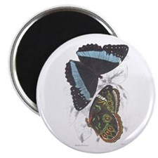"Butterfly Insects 2.25"" Magnet (10 pack)"
