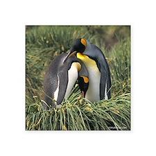 "King Penguin Lovers Square Sticker 3"" x 3"""